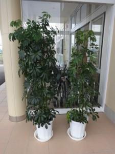 虫干し観葉植物